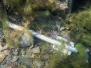 210324 Gewässererkundung